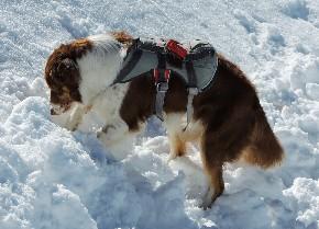 soccorso alpino argy ll